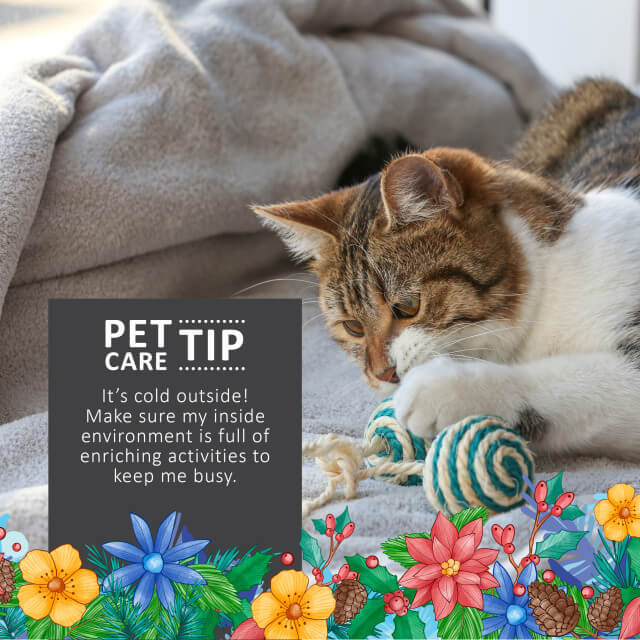 Pet Safe Winter Tips