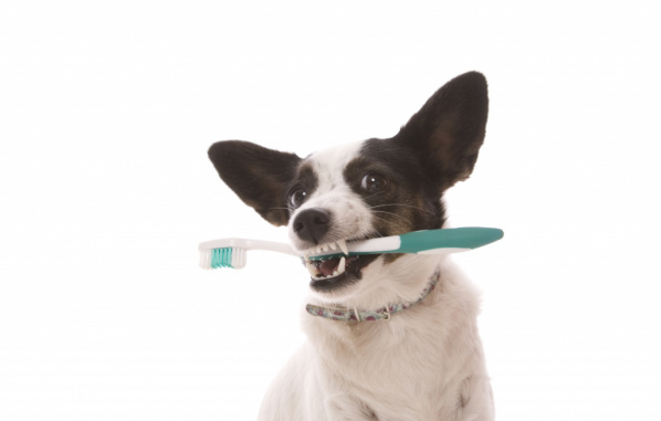 How to examine pets teeth and gums